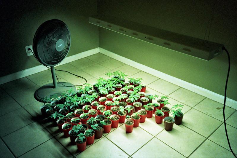 Best Marijuana Lights for Growing Weed Indoors