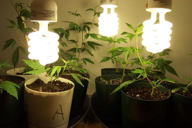The Reasons Why a Grower Should Clone Marijuana