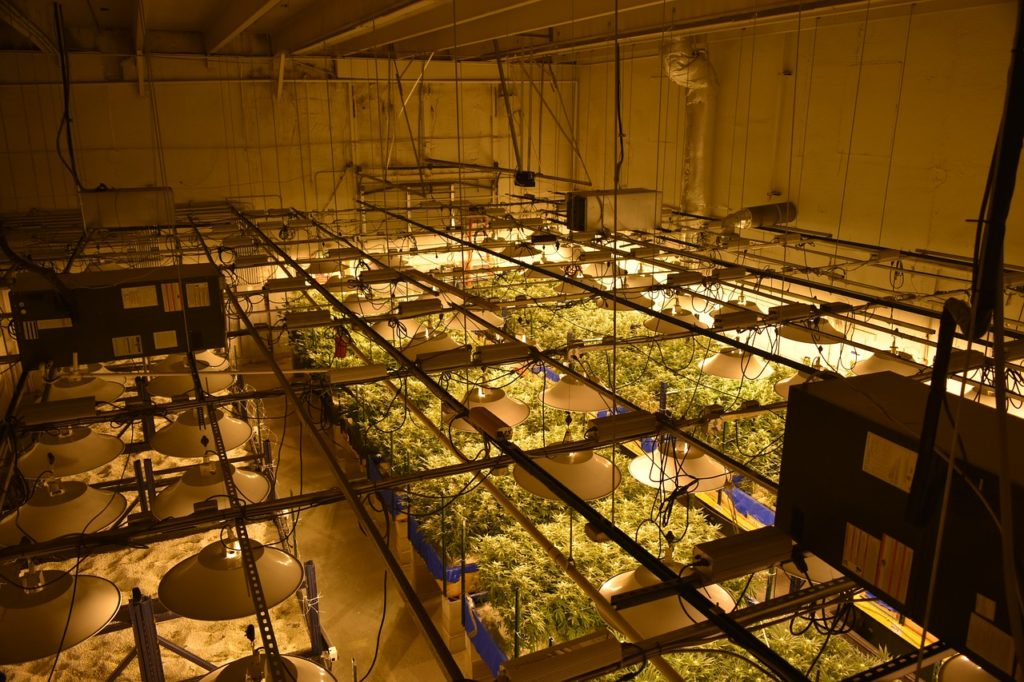 how much light is too much for cannabis