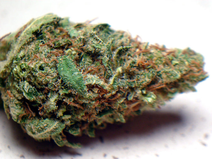 White Empress Marijuana Strain Review
