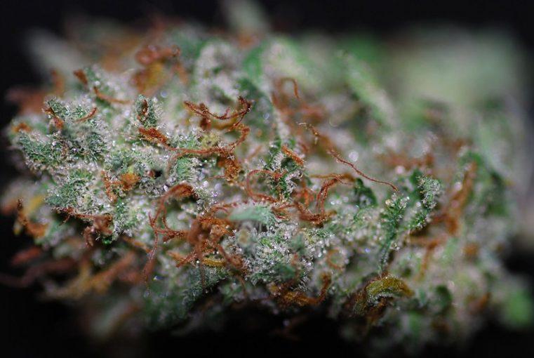 Sweet Diesel Marijuana Strain Review