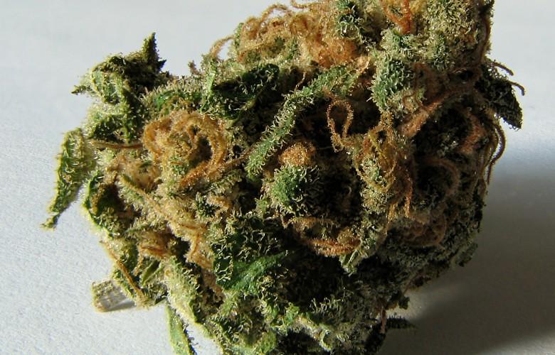 Verde Electric Marijuana Strain Review
