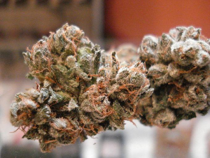 Super Jack Marijuana Strain Review