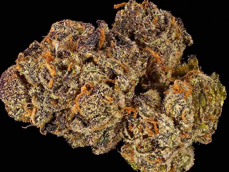 Dutch Dynasty Marijuana Strain Review