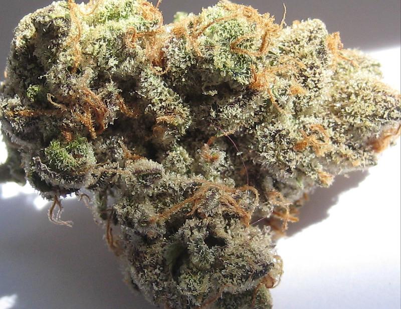 Tuna OG Marijuana Strain Review